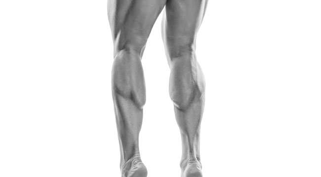 high-volume-legs-shoulder-length