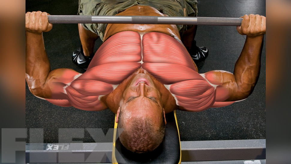 Blow Up Your Bench for a Massive Chest