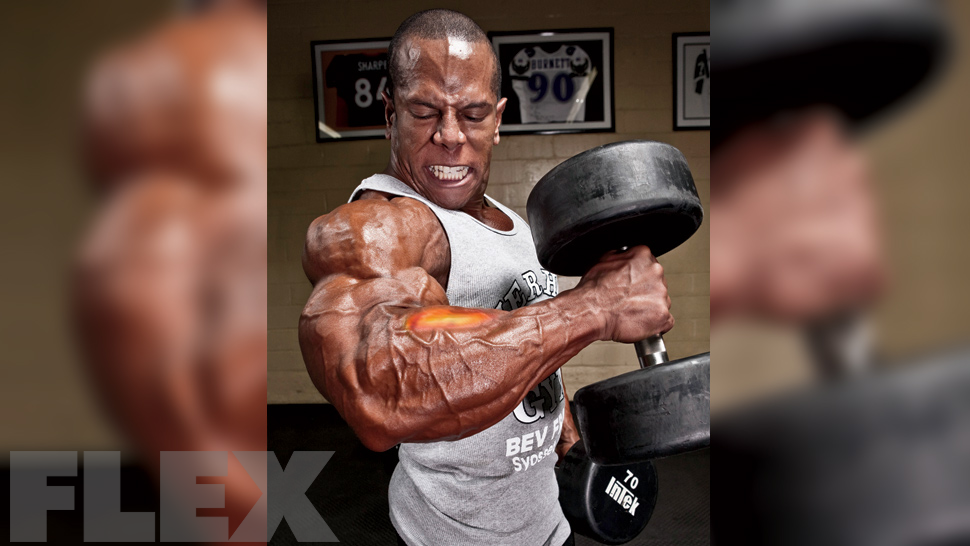 reverse curls work what muscle