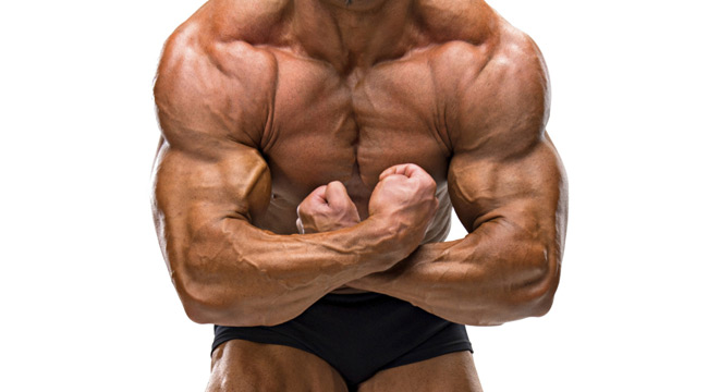 The Mechanics Of Shoulder Training Muscle Fitness