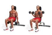 Seated Curl thumbnail