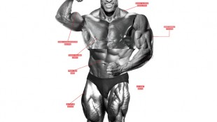 The Best Olympia Body Part Workout thumbnail