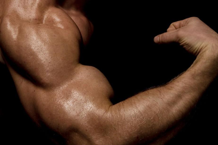 12 Set Arm Blitz Muscle Fitness
