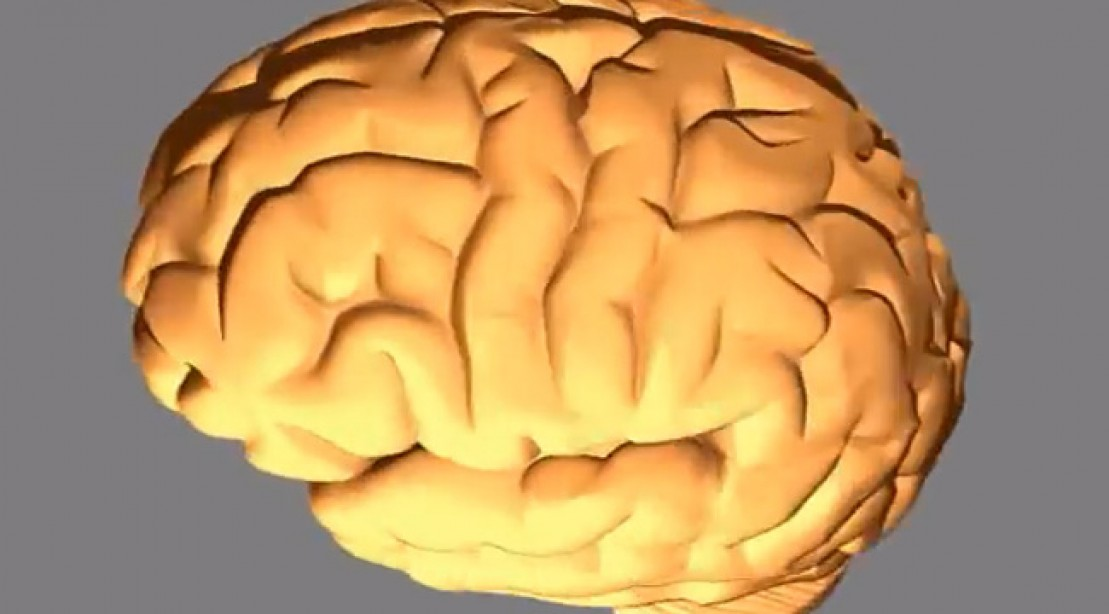 Study: Human Brain Sucked up Muscle Growth