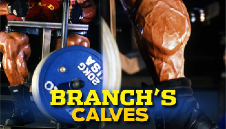 BRANCHS CALVES