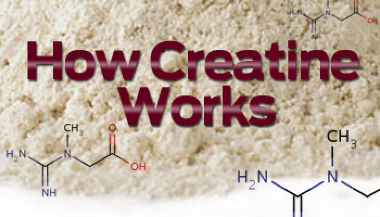 How Creatine Works