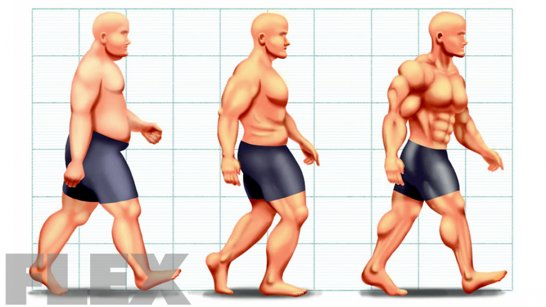 Evolution of Fat Loss