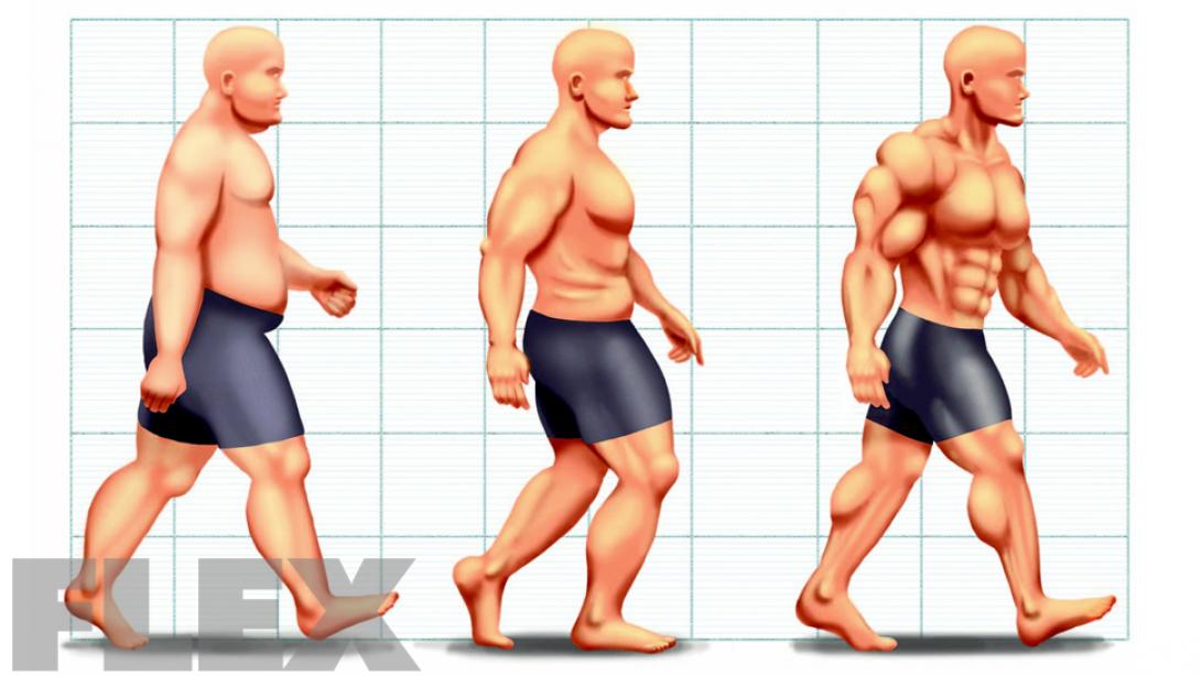 Evolution of Fat Loss