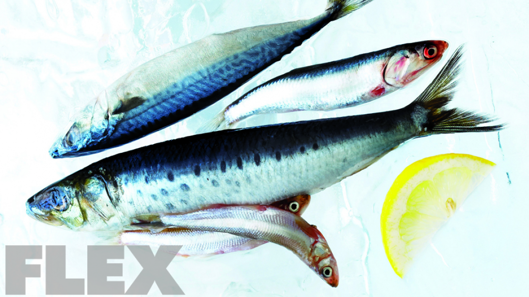 The Best Fish for Bodybuilders
