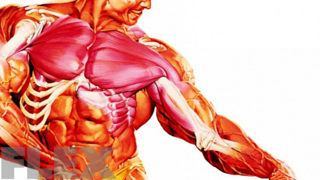 Build Muscle Mass While Preventing Joint Damage