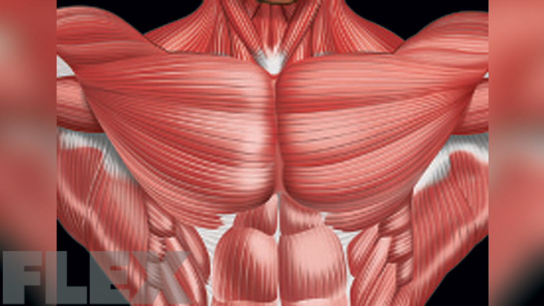 Every Angle Chest Workout