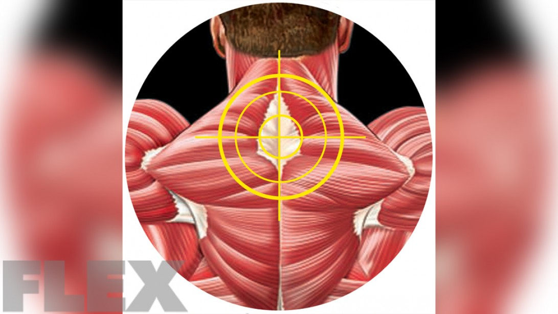 Build Your Middle/Upper Traps Tie-In