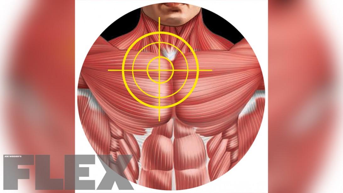 build your upper inner pecs muscle & fitness diagram of spectrophotometer diagram of pecs #9