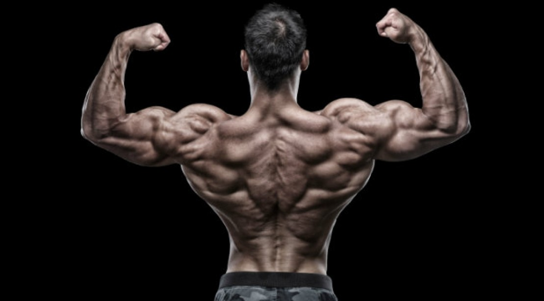 Muscle Building Routine Back Workout For Strength Size