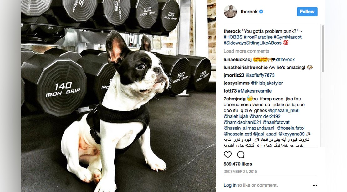 When Dwayne The Rock Johnson And His Dog Hobbs Were The