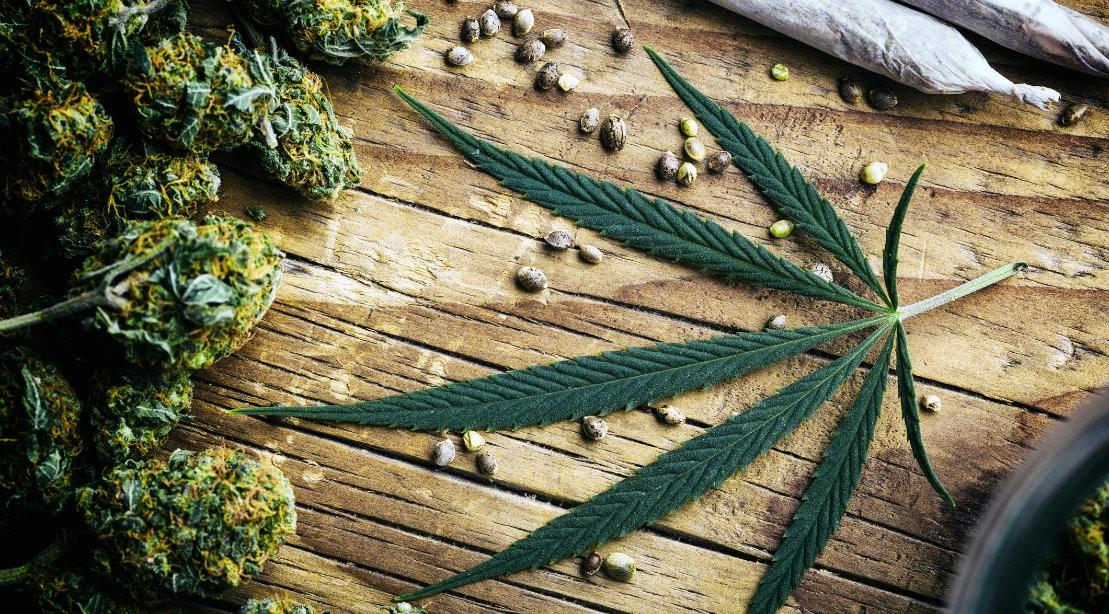 Marijuana leaf and cannibus buds