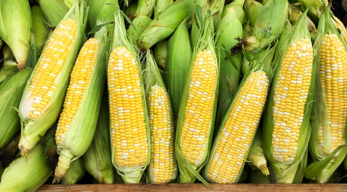 Corn on the Cob at the Market