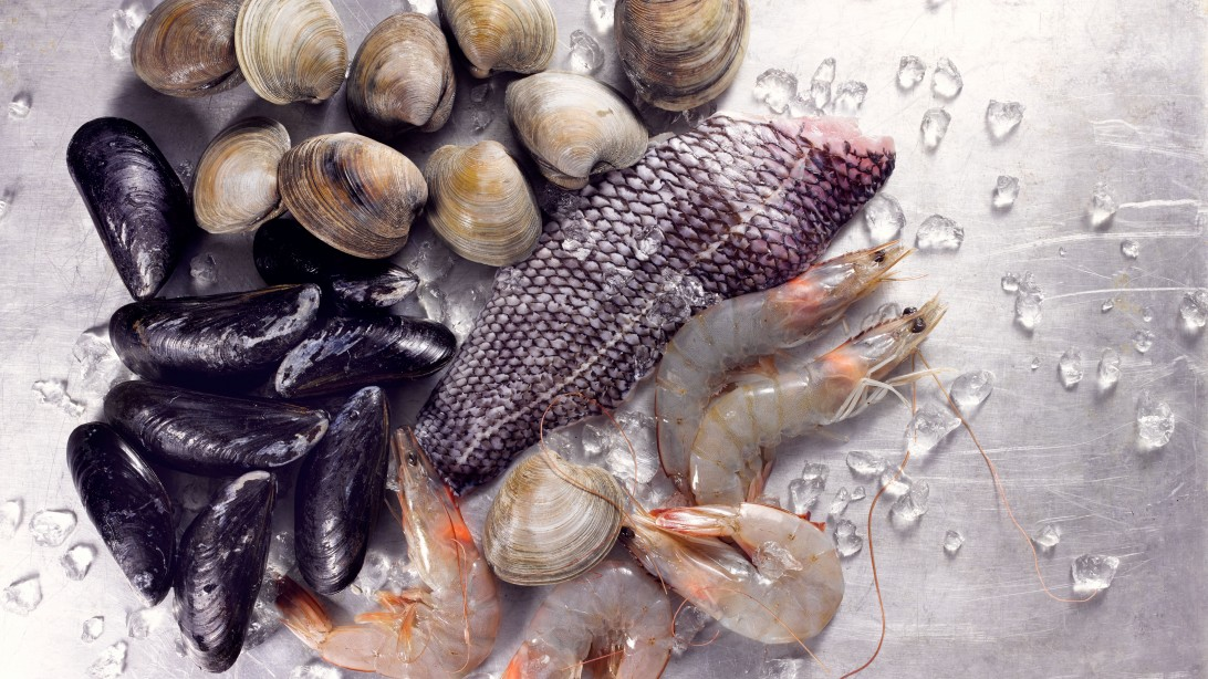6 Fish Alternative Recipes