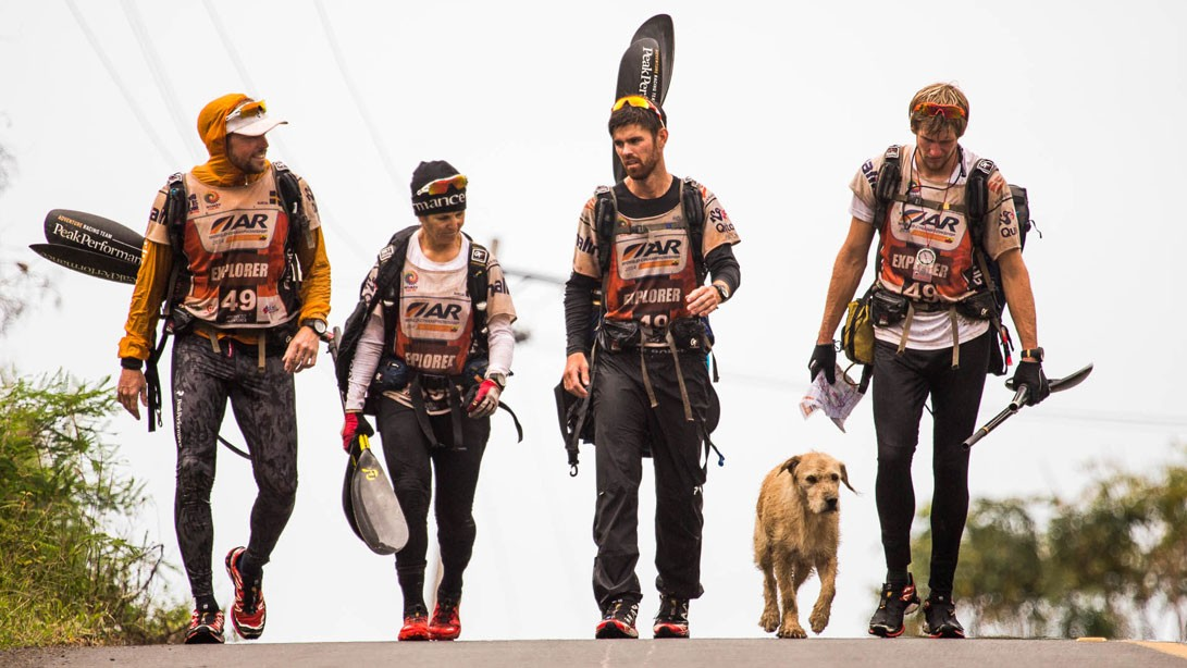 stray dog multi-sport team