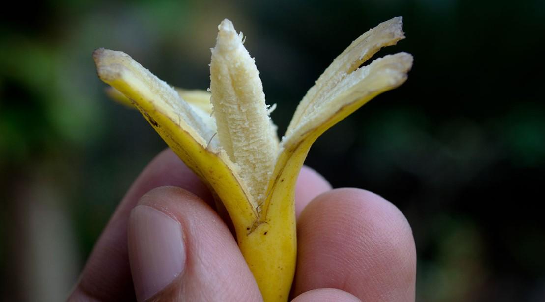 Tiny Banana
