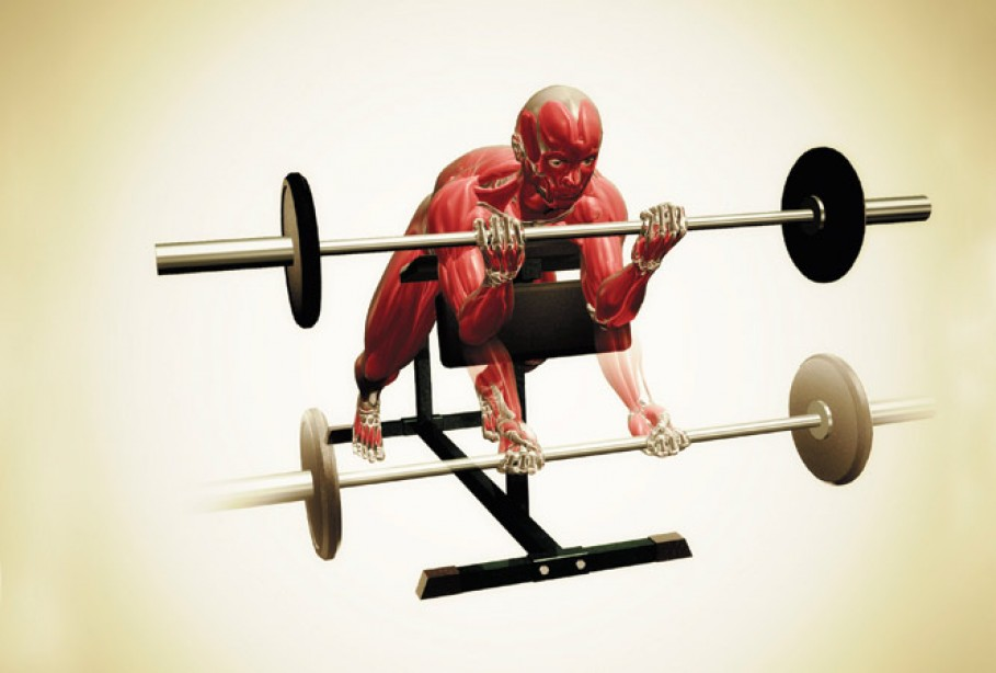 Anatomy Of An Exercise The Spider Curl Muscle Fitness