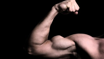 A picture of a flexed bicep