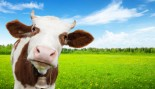 Your Complete Guide to Dairy thumbnail