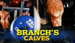 BRANCHS CALVES thumbnail