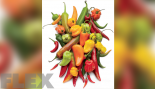 Absurdly Hot Chili Peppers Are Amazingly Good For You thumbnail