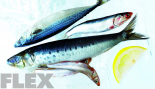 The Best Fish for Bodybuilders thumbnail