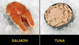 FISH FOR PROTEIN thumbnail