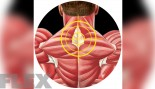 Build Your Middle/Upper Traps Tie-In thumbnail