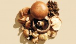 5 Types of Mushrooms and Their Health Benefits thumbnail