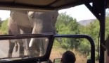 Elephant Charges Arnold Schwarzenegger's Safari Vehicle  thumbnail
