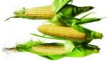 corn thumbnail
