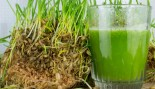 wheatgrass thumbnail
