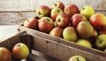 apples thumbnail