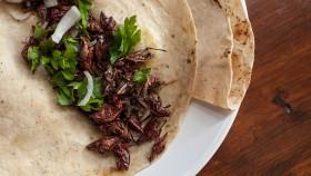 Grasshopper Tacos thumbnail