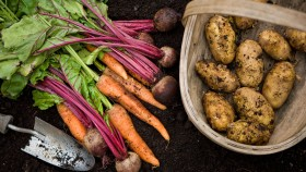 Root Vegetables thumbnail