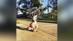 Zuck Ruhl Handstand Pushups in a Wheelchair thumbnail
