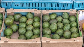 Avocad-oh-no! Six States Recall Avocados Over Listeria Hysteria thumbnail