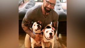 Dave Bautista New Pit Bull Dogs thumbnail