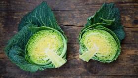 cabbage thumbnail