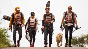 stray dog multi-sport team thumbnail