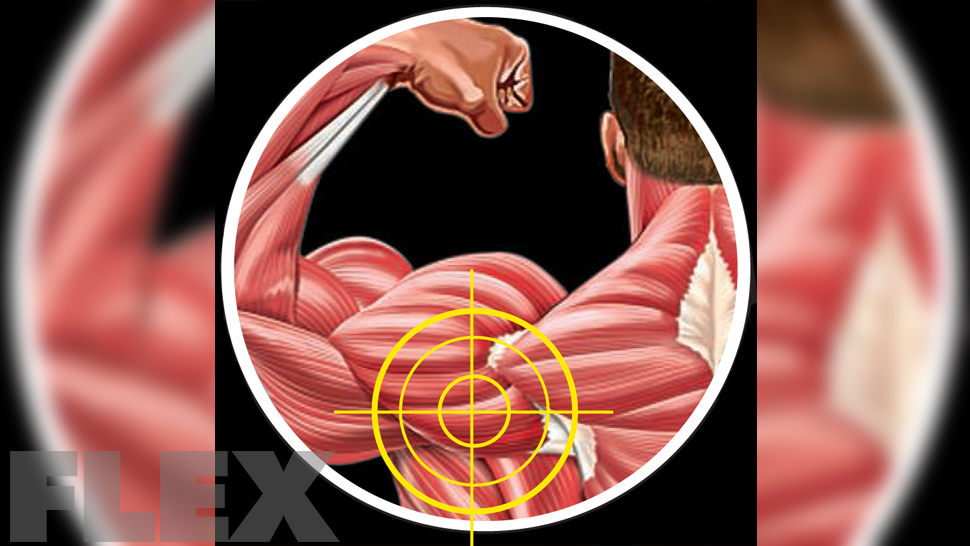 Don\'t Forget Your Rear Delts   Muscle & Fitness